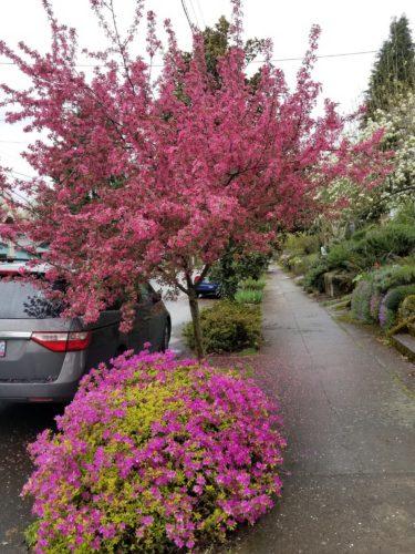 Portland Spring: Consciousness Stream