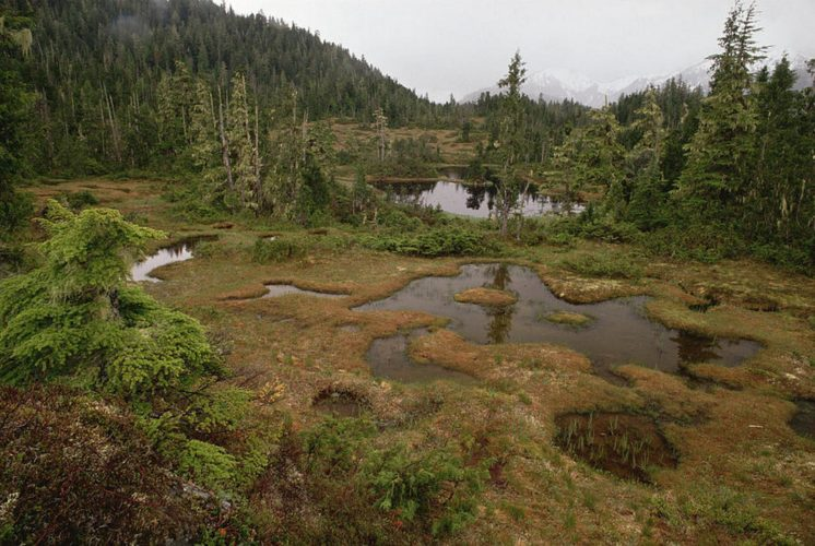 Muskeg, Moose, Muskrats—and Mosquitoes